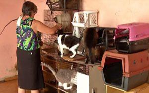 Suzano passa a oferecer atendimento emergencial gratuito para animais vítimas de acidentes e maus-tratos