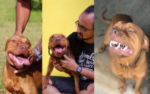 """Pitbull resgatado de """"rinha"""" não para de sorrir no novo lar"""