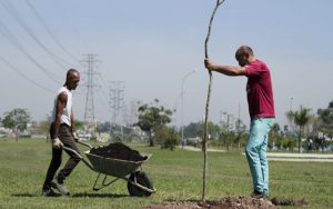 Viveiro Municipal implanta o Disk Árvore