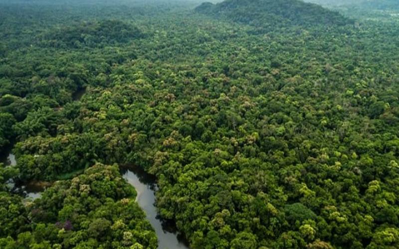 Ministério da Economia recomenda concessão de florestas no AM