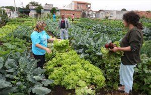 Programa de Incentivo à Implantação de Hortas Comunitárias entra em vigor em Suzano